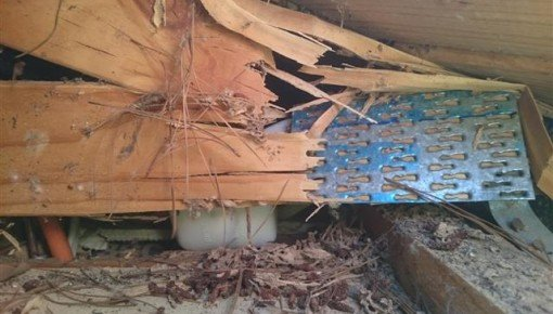 Unsafe termite damaged roof truss