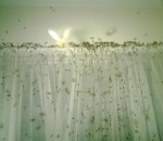 Termites inside house
