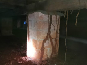 Termite mudding tracking up and down piers and frames