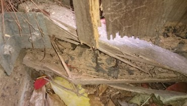 Termite damage to wall frame